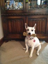 Libby bone & the bookcase