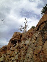 Tree and Cliff