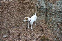 Chloe on the Rocks