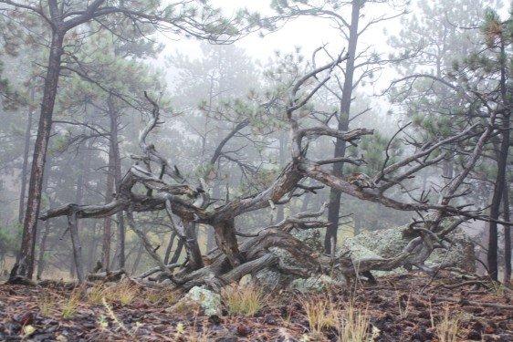 Woodland Drift