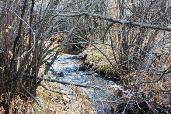 creek-water-030