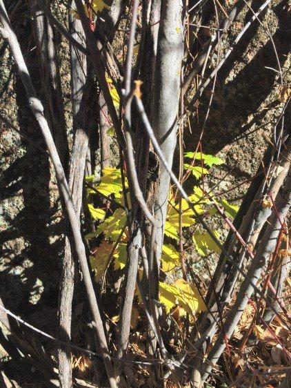 fall-treasure-leaves-3993