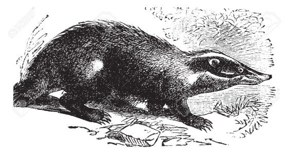 badger-dude-1