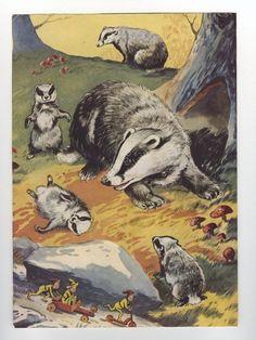 badger-dude-enid-blyton